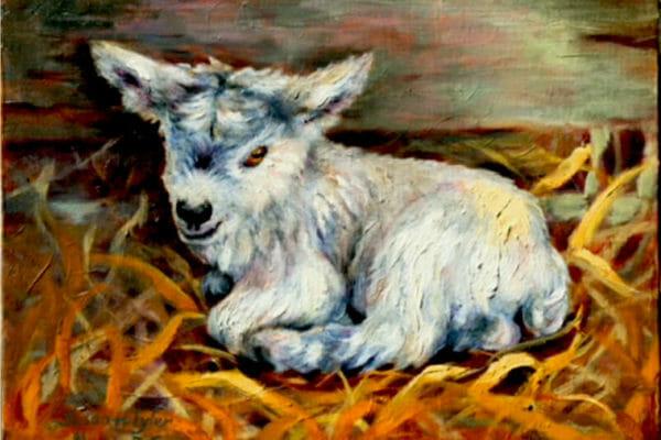Vicki's Goat