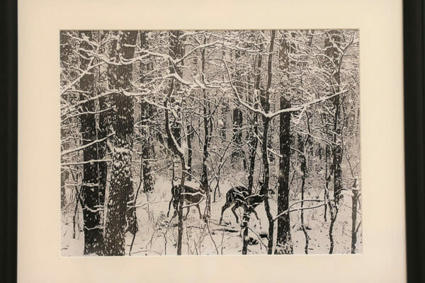17_David L. Bechler-Deer and Snow, Lookout Mountain $300