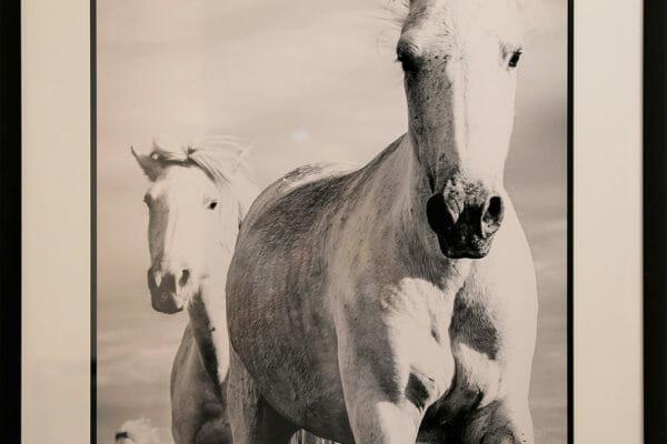 190_David Retterbush-Camargue Horses 2 $400