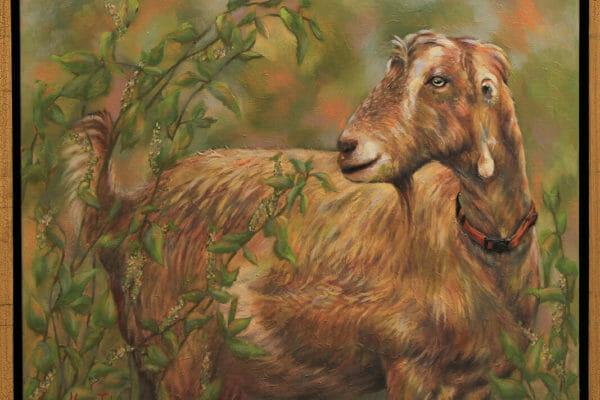 232_Susan Tyler-Lamancha Goat $780
