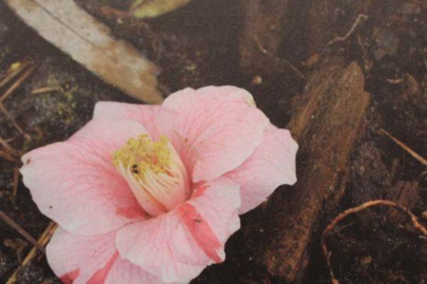 #230 Elisa Ray - New Spring - $250